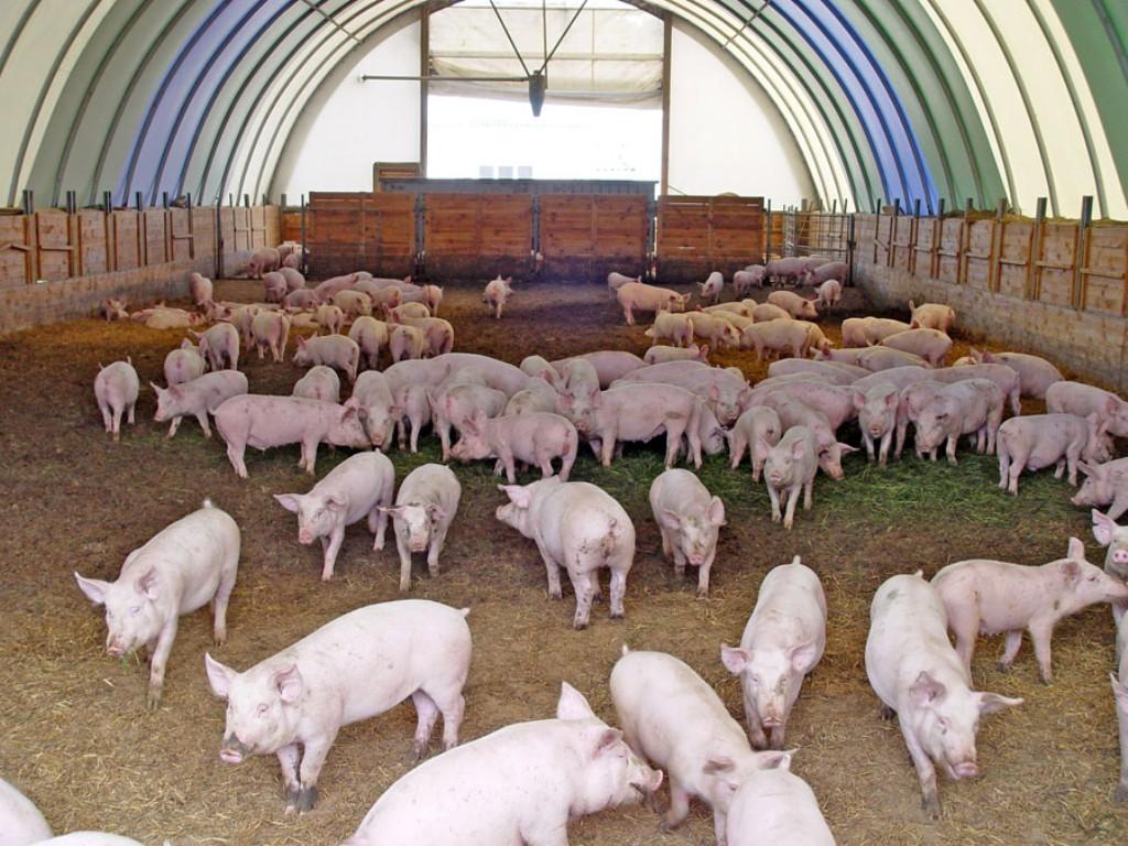 Власти Камчатки обсудили проекты строительства свинофермы